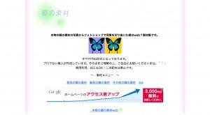 本物の蝶の素材web